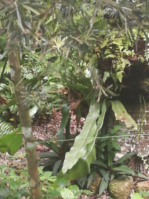 ペナン島トロピカルスパイスガーデンのジャングル