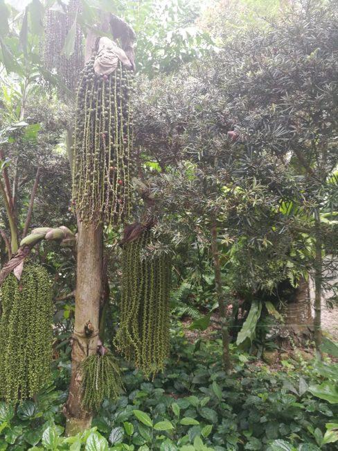 ペナン島トロピカルスパイスガーデンのスパイスの森