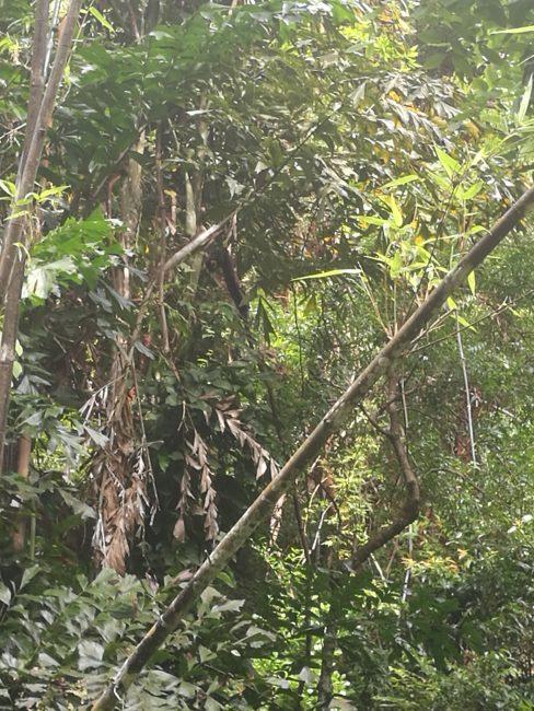 ペナン島トロピカルスパイスガーデンの大きくて尻尾の長いリス