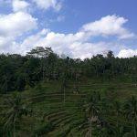 バリ島テガララン棚田の風景